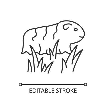 Guinea pig pixel perfect linear icon. Shaggy rodent in grass. Local Peruvian wildlife. Thin line customizable illustration. Contour symbol. Vector isolated outline drawing. Editable stroke