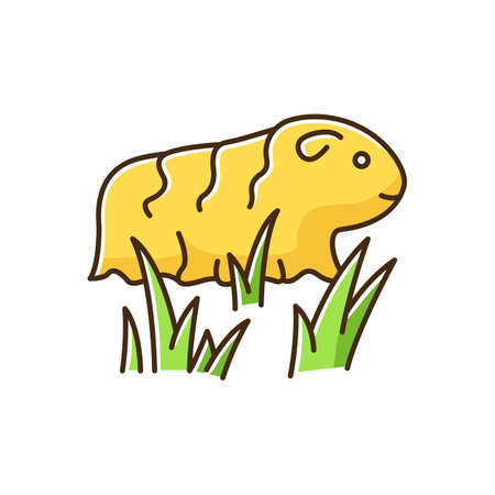 Guinea pig yellow RGB color icon. Shaggy rodent in grass. Pocket pet. Adorable domestic cavy in fresh air. Cute little cavia. Local Peruvian wildlife. Isolated vector illustration