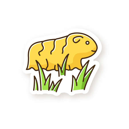 Guinea pig patch. Shaggy rodent in grass. Pocket pet. Adorable domestic cavy in fresh air. Cute little cavia. Local Peruvian wildlife. RGB color printable sticker. Vector isolated illustration