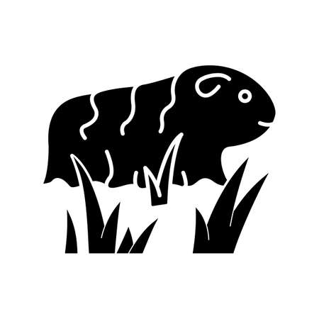 Guinea pig black glyph icon. Shaggy rodent in grass. Pocket pet. Adorable domestic cavy. Cute little cavia. Local Peruvian wildlife. Silhouette symbol on white space. Vector isolated illustration