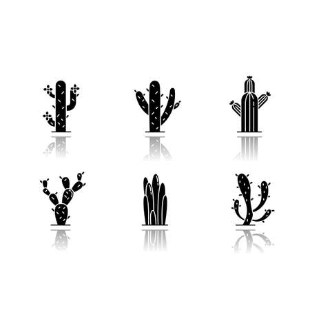 Cactuses drop shadow black glyph icons set. American desert plants. Family Cactaceae. Different prickly succulents. Arid area thorny wildflowers. Isolated vector illustrations on white space