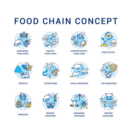 Food chain concept icons set. Primary, secondary and tertiary consumers. Small and top carnivores. Life cycle idea thin line RGB color illustrations. Vector isolated outline drawings. Editable stroke
