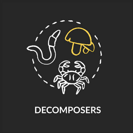Decomposers chalk RGB color concept icon. Food chain final link, reducers. Biological process in nature idea. Vector isolated chalkboard illustration on black background