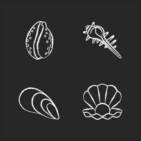 Different sea shells chalk white icons set on black background. Seashells collection, conchology Open clam with pearl, spiked conch, cowrie and cone shells isolated vector chalkboard illustrations