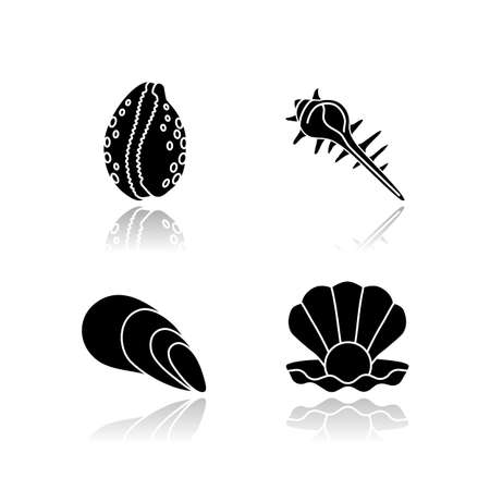 Different sea shells drop shadow black glyph icons set