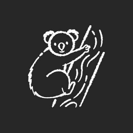 Koala chalk white icon on black background. Cute herbivore animal, australian native fauna, exotic wildlife. Adorable koala bear sitting on eucalyptus tree isolated vector chalkboard illustration