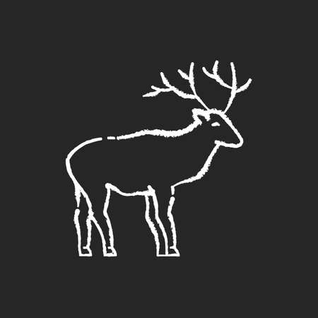 Deer chalk white icon on black background. Hoofed ruminant mammal, herbivore animal with beautiful antlers. Forest wildlife. Majestic reindeer, horned stag isolated vector chalkboard illustration