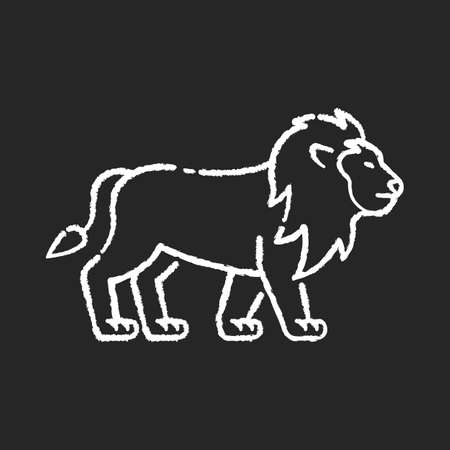 Lion chalk white icon on black background. Exotic carnivore animal, dangerous predator. Tropical zoo inhabitant. African safari, savanna. Wild cat with mane isolated vector chalkboard illustration Ilustração