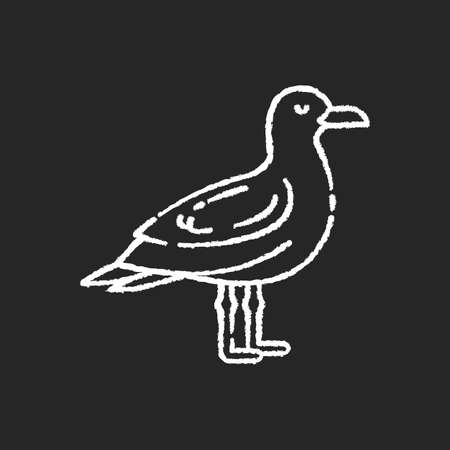 Seagull chalk white icon on black background. Common seabird, ordinary flying animal. Beaches and coastlines inhabitant. Zoology, ornithology. Sea mew, gull isolated vector chalkboard illustration
