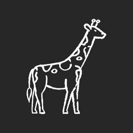 Giraffe chalk white icon on black background. Exotic animal with long neck, african herbivore wildlife. African savanna, tropical zoo. Tall camelopard isolated vector chalkboard illustration