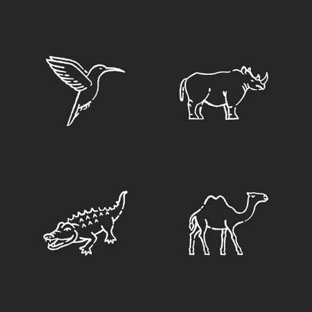 Exotic animals chalk white icons set on black background. Tropical fauna, diverse african wildlife. Little hummingbird, camel, alligator and rhinoceros. Isolated vector chalkboard illustrations