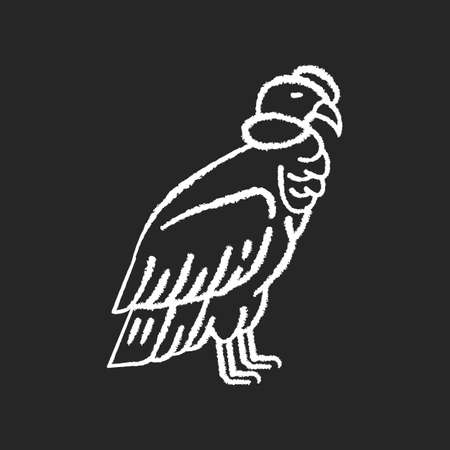 Condor chalk white icon on black background. Large bird of with sharp beak and claws. New world vulture, predatory bird. Zoology, ornithology. Andean condor isolated vector chalkboard illustration