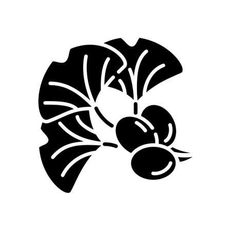 Ginkgo biloba black glyph icon. Natural herbal ingredient. Japanese plant leaf and bean. Alternative medicinal additive for energy drink. Silhouette symbol on white space. Vector isolated illustration Ilustração Vetorial