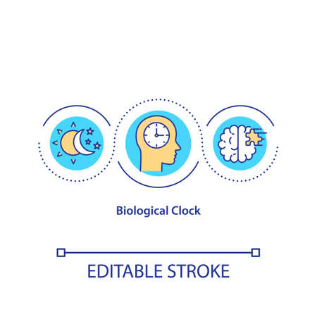 Biological clock concept icon. Human daily sleep and wake cycle idea thin line illustration. Circadian rhythm, brain activity time. Vector isolated outline RGB color drawing. Editable stroke