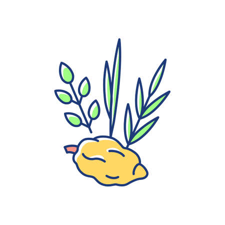 Four species RGB color icon. Jewish holiday. Etrog, lulav, hadas, arava. Sukkot week-long festival. Symbolic meaning. Citron tree fruit. Palm tree branches. Isolated vector illustration  イラスト・ベクター素材