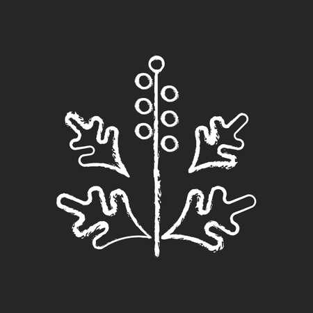 Ragweed pollen chalk white icon on black background. Blooming ambrosia. Cause of allergic reaction. Dangerous herbal allergen. Allergy for plant. Isolated vector chalkboard illustration Vektoros illusztráció