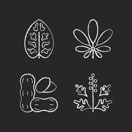 Reason for allergy chalk white icons set on black background. Dieffenbachia, schefflera. Ragweed pollen. Allergen from peanuts. Cause of allergic reaction.Isolated vector chalkboard illustrations Vektoros illusztráció