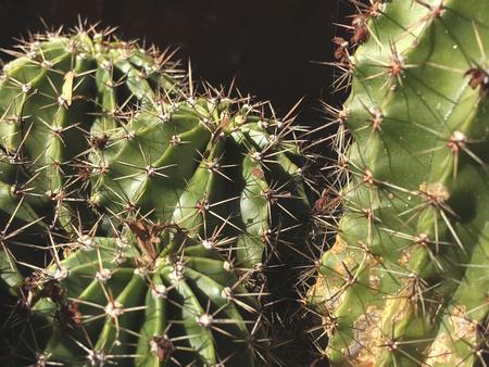 cactus close up detail