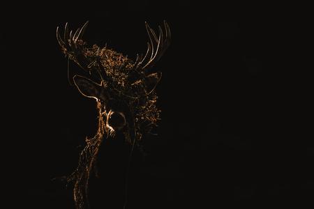 Red Deer (Cervus elaphus) portrait. Banco de Imagens