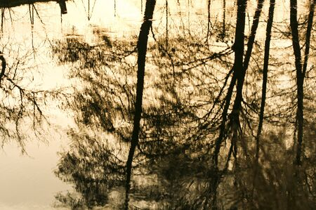 Golden reflections on river water