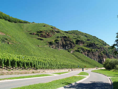 viniculture: The special viniculture at the river Mosel