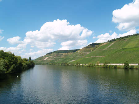 viniculture: Viniculture at the Mosel