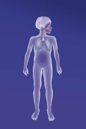 Respiratory Tract,Drawing