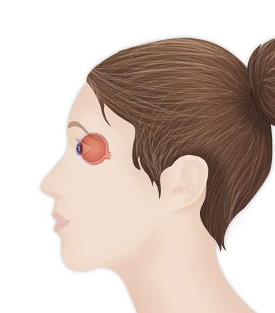 Anatomy,Eye LANG_EVOIMAGES