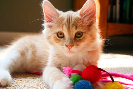 A kitten resting with a set of colorful toys.