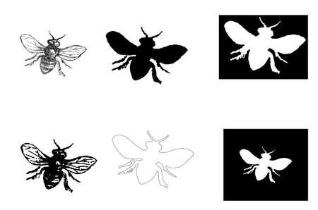 abejas: abeja vendimia Vectores