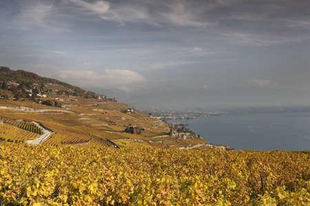 Autumn view over lake Geneva from the Lavaux vines, Vaud, Switzerland  Imagens