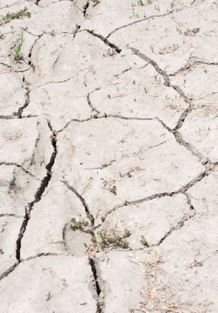 resilience: A stretch of cracked, parched, dry land filling the frame.