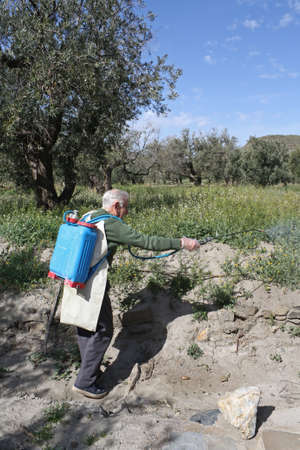 Elderly farmer spraying weed pesticide in an olive tree field in Spain. photo
