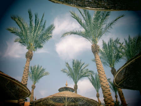 vignetting: Worms eye view of palm trees and wicker umbrellas on a beach with vignetting due to toy camera effect
