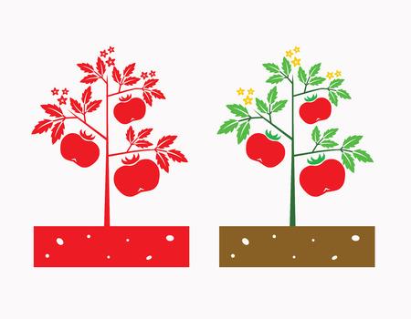 tomates: planta de tomate con tomate frutas y flores de tomate Vectores