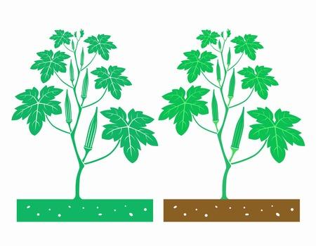 pruning okra plant diagram wiring diagram all data Okra Varieties pruning okra plant diagram wiring diagrams lose how do you plant okra pruning okra plant diagram