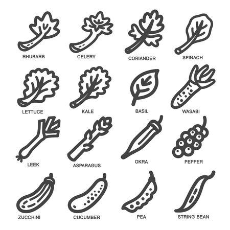 rhubarb: vegetable thin line icon set,vector illustration