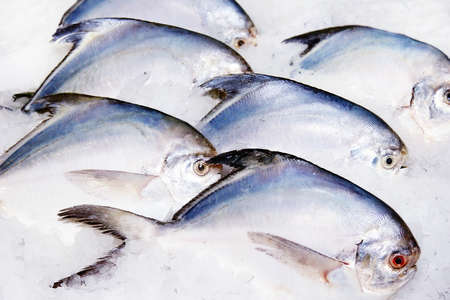 fishes in ice photo