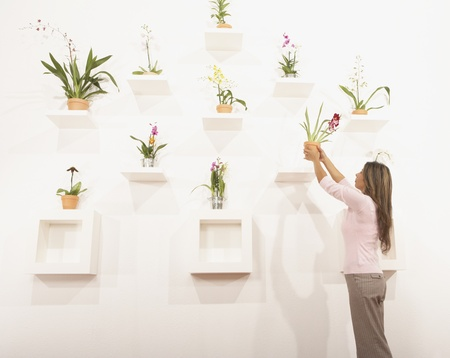 Businesswoman putting potted flowers on their shelf 스톡 콘텐츠