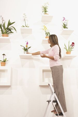 placing: Businesswoman putting potted flowers on their shelf LANG_EVOIMAGES