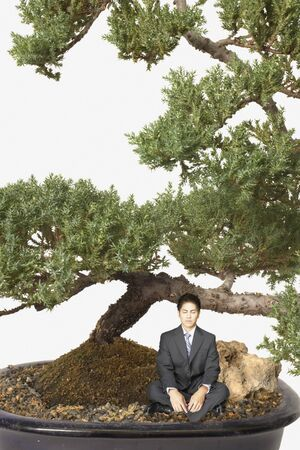 Businessman meditating by a giant bansai tree Stock Photo - 16090004