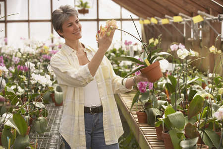 conservatory: Hispanic woman looking at potted plant in greenhouse