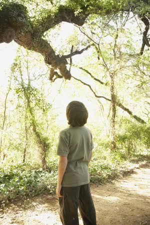 spectating: Hispanic boy looking at tree in woods