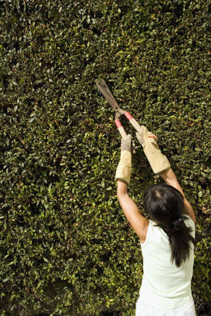 far off: Asian woman pruning hedges