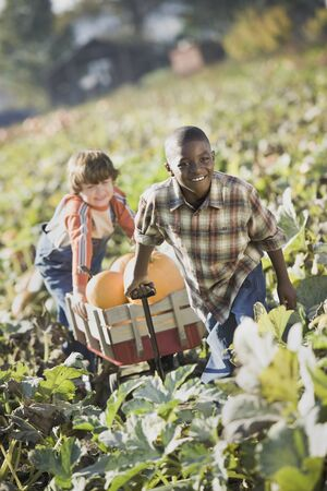 Two boys pulling wagon through pumpkin patch Stock Photo - 16093072