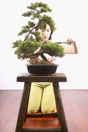 tree trimming: Young woman trimming a bonsai tree LANG_EVOIMAGES