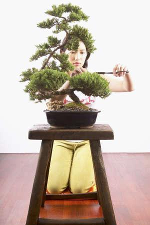 bonsai tree: Young woman trimming a bonsai tree LANG_EVOIMAGES