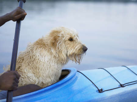 adoring: Side view of dog sitting in kayak with hands of man
