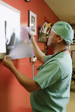 scrub cap: Veterinarian examining animal x-ray LANG_EVOIMAGES