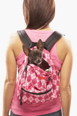 pampered pets: Asian woman carrying dog in backpack